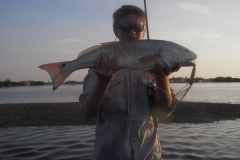 7-4-08redfish-34inch
