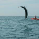 Tarpon: Beach Patrol, Kayak Style